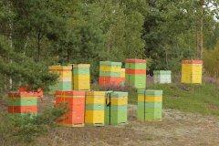"""Bites viršu ganībās Ādažu poligonā jeb Aizsargājamo ainavu apvidū """"Ādaži"""". 2014.gads."""