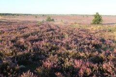 Viena no nozīmīgākajām dabas vērtībām aizsargājamo ainavu apvidū - virsājs ap 1040 ha teritorijā.
