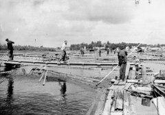 Alderu plostnieki darbā. Foto 20.gs. 50.gadi.