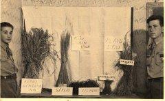 Ādažu skolas 76.mazpulka audzēkņi ražas izstādē. Foto ap 1930.gadu.