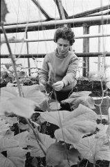 """Kolhoza """"Ādaži'' dārzniece Maija Gamblate. 1968.gada marts."""