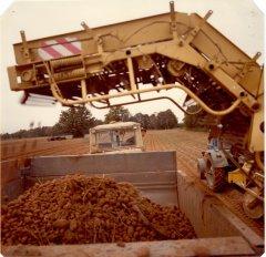 Kartupeļu novākšanas kombains kolhoza ''Ādaži'' laukos. 1986.gads.