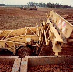 Kartupeļu novākšanas darbi kolhoza ''Ādaži'' laukos. 1986.gads.