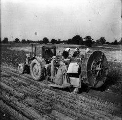 """Vienrindas kartupeļu novākšanas kombains kolhoza """"Ādaži'' kartupeļu laukā. 1962.gada 28.septembris."""